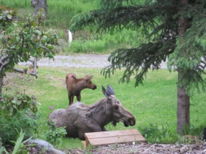 The wood in the photo is top of a stairs Walt leading to our front yard garden. I have actually seen moose use them!