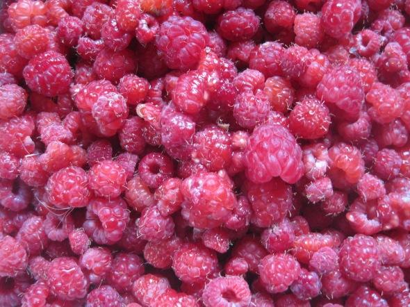 Raspberries August 2013