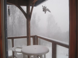 Snow Storm Homer, Alaska 2014