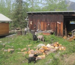 McCarthy Cabin Maria Shell