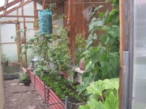 McCarthy Gardens--McCarthy Style