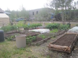 Maria Shell Vegetable Garden--McCarthy Style